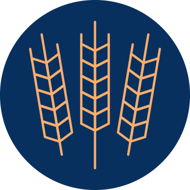 Buğday Sapı